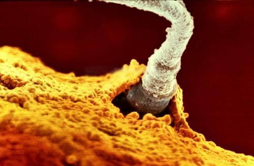 Один из 200 миллионов отцовских сперматозоидов, прорвав оболочку яйцеклетки, буквально вливается в нее